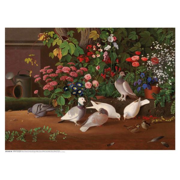 Vaaleita lintuja taustalla erivärisiä kukkia
