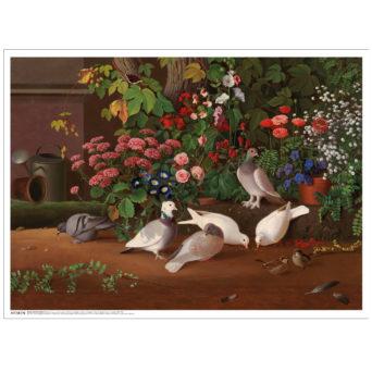 Kukkia ja lintuja puutarhan nurkassa teos valkoisilla reunoilla, kuvassa kaksi valkoista kyyhkystä syömässä ja kolme harmaata kyyhkystä seisomassa, sekä kaksi pientä lintua oikeassa nurkassa, alla Makia Clothing co. teksti