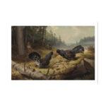 Taistelevat metsot teos valkoisilla reunoilla, kaksi urosmetsoa keskellä kuvaa ja taustalla yksi naaras metso